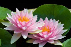 healing masaža